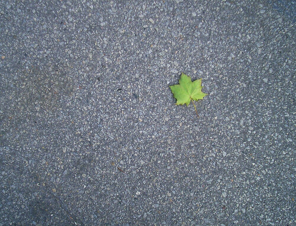 The lone Maple Leaf by SimonesPlace