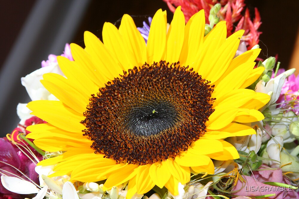 SUNFLOWER  by LISAGRAMBLE