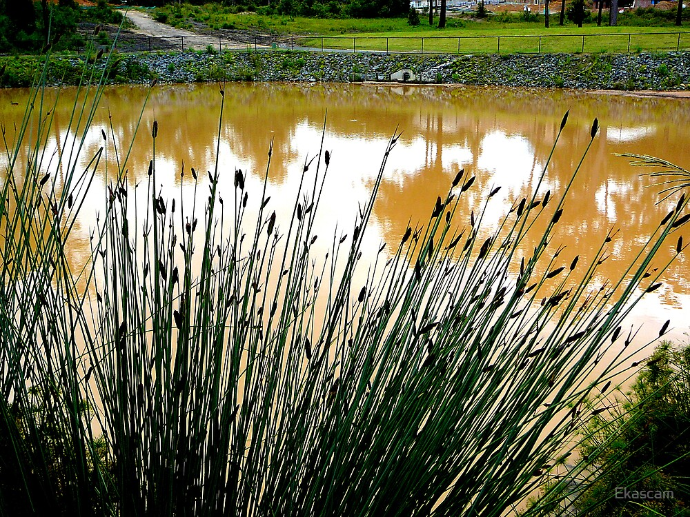 REEDS & REFLECTION by Ekascam