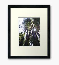 Henry Cowell Redwoods 03.05.2015 836 Framed Print
