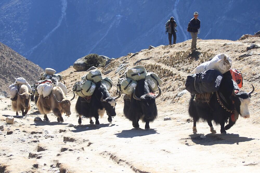 A yak parade by Nawal