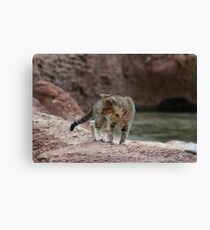 Little Adventurer Canvas Print