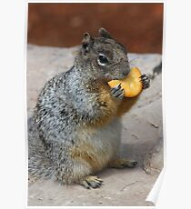 Squirrel Greeting Card  Poster