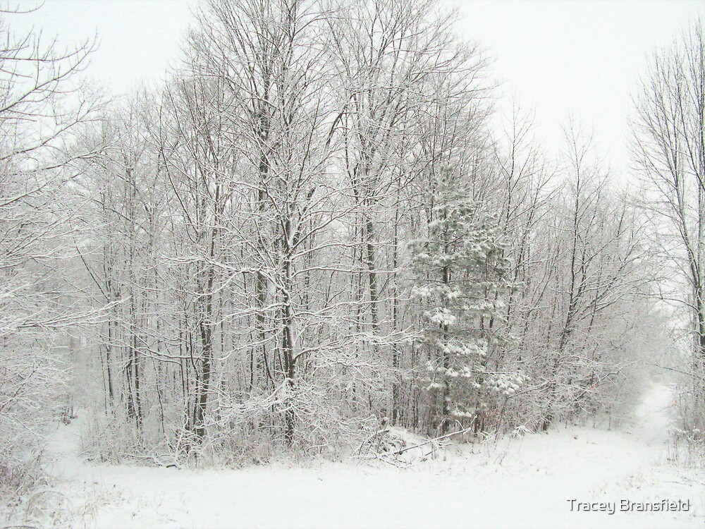 Winter Wonderland by Tracey Bransfield