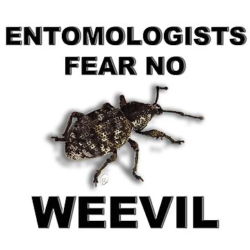 Entomologists Fear No Weevil by MVanHyll