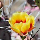 Bright Yellow Cactus Flower by Kathleen Brant