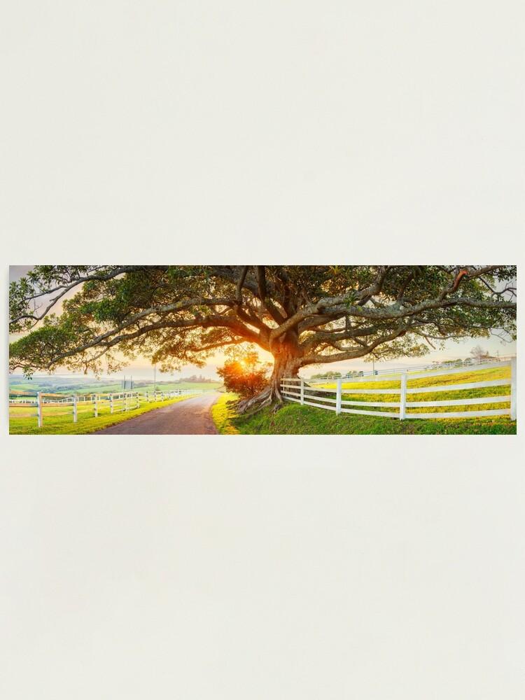 Alternate view of Road to Kiama, New South Wales, Australia Photographic Print