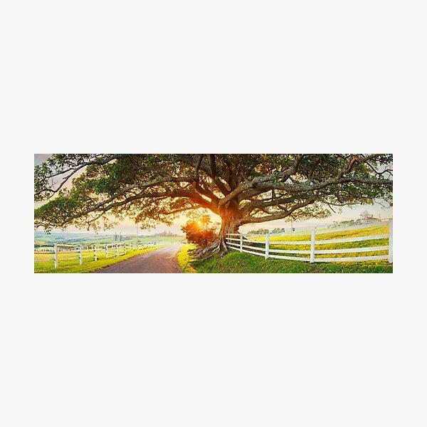 Road to Kiama, New South Wales, Australia Photographic Print