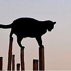 Balancing Act by © Loree McComb