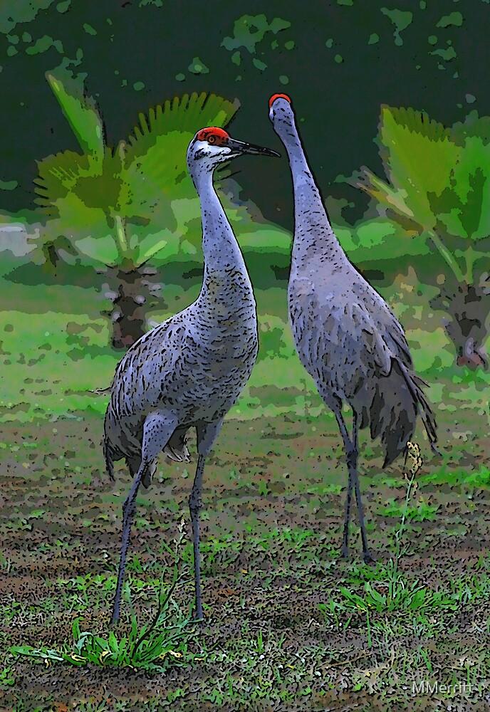 Sandhill Cranes by MMerritt