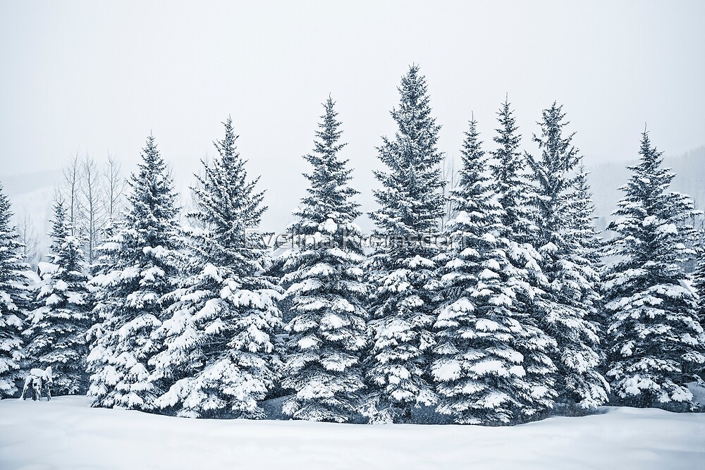 The Crown Of Winter by Evelina Kremsdorf