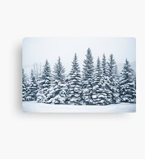 The Crown Of Winter Canvas Print