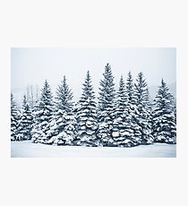 The Crown Of Winter Photographic Print
