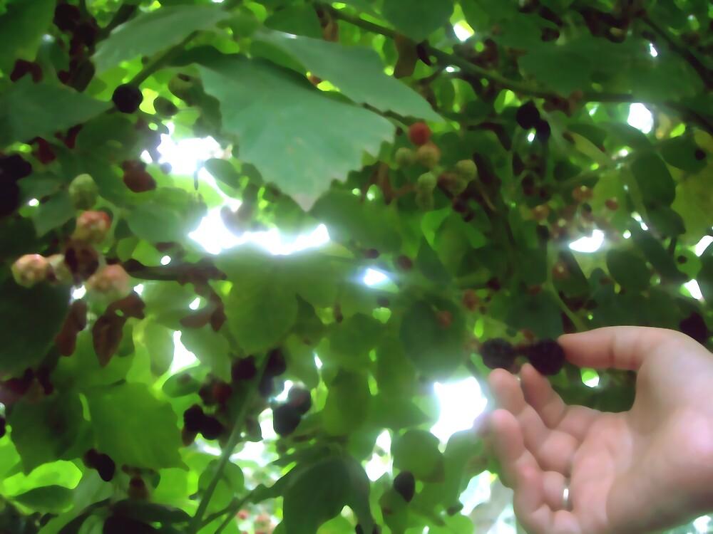 Berry Pickin. by Geoffrey Wicking