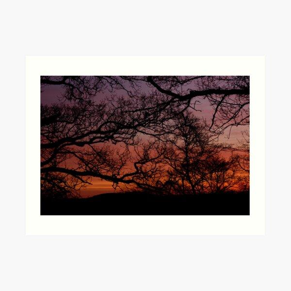 Sunset Branches Art Print