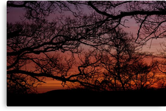 Sunset Branches by Ed Stone