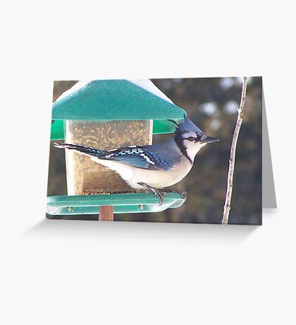 Look at the Birdie! Greeting Card
