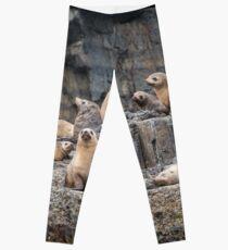 Seal Family Leggings