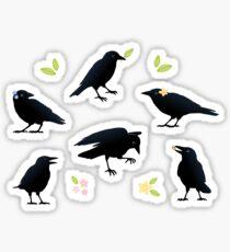 Playful crows Sticker