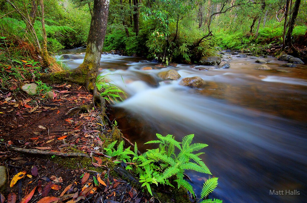 Little River Merge by Matt Halls