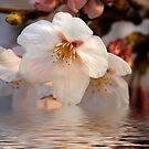 Spring by Bobby McLeod