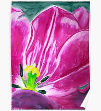 Water Color Tulip Poster