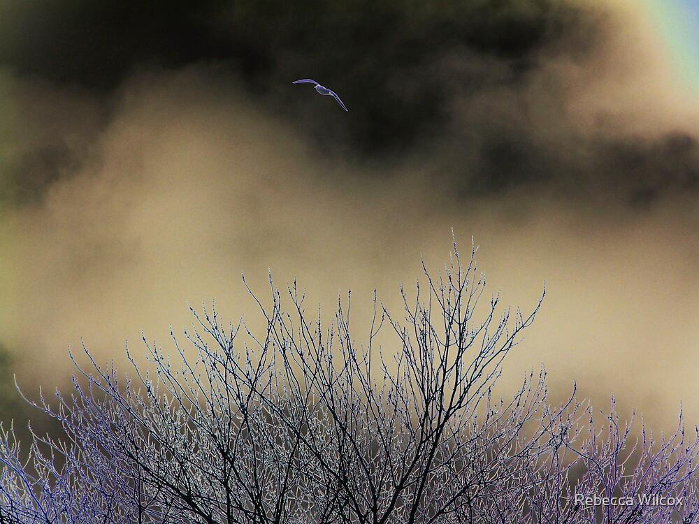 Hovering by Rebecca Brann