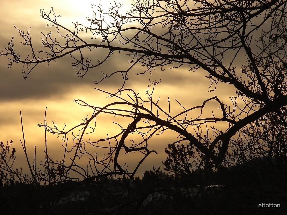 Winter Skies by eltotton