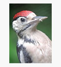 Woodpecker Close Up Photographic Print
