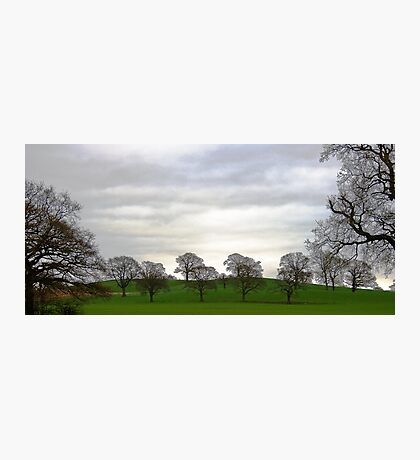 Capesthorne Trees Photographic Print