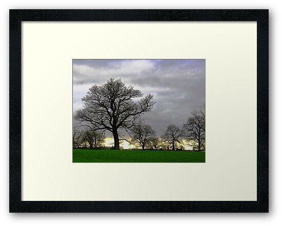 Simple Trees by Andrew Dunwoody