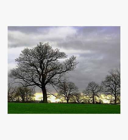 Simple Trees Photographic Print