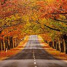 Honour Avenue by Joel Bramley