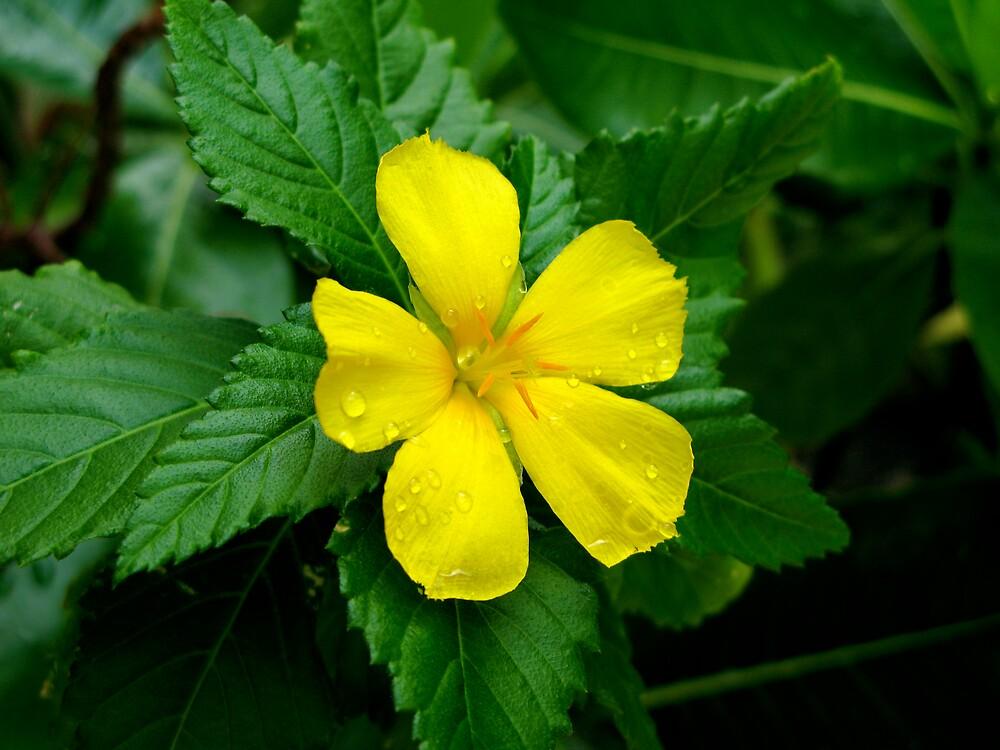 Flower in the rain by Bonnie  Barbey