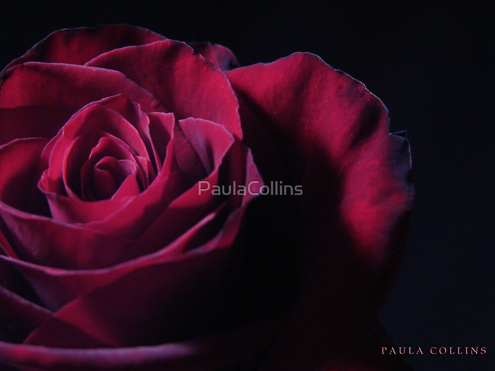 Remember the Thorns by PaulaCollins