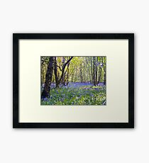 Beautiful bluebells Framed Print