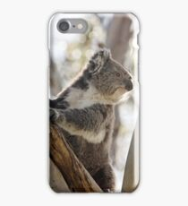 Koala Bear, Victoria, Australia iPhone Case/Skin