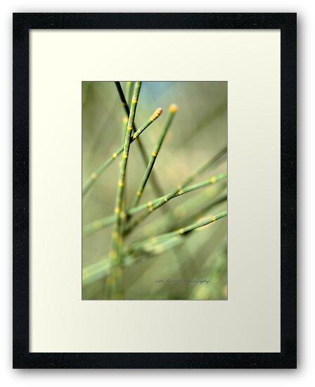 Green Tangle © Vicki Ferrari by Vicki Ferrari