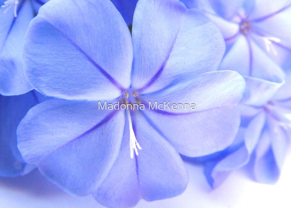 """""""True Blue"""" by Madonna McKenna"""