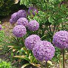 March of the Alliums von BlueMoonRose