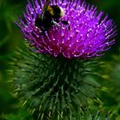 Busy Bee by Sheilz