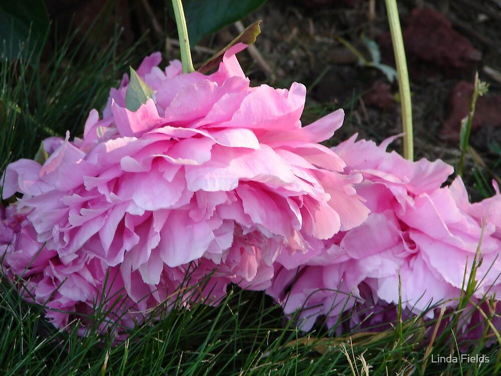 Pink Peony by Linda Fields