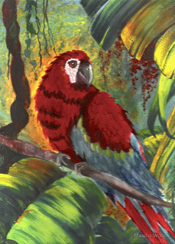 Macaw by Marsha Woods
