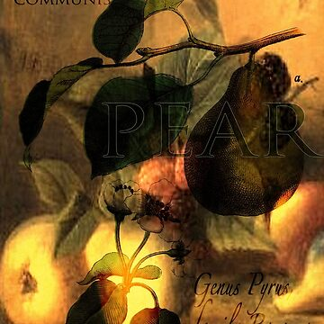 La Poire #1 by tillymagoo