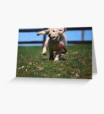 """Golden Retriever Puppy On The Run..."" Greeting Card"