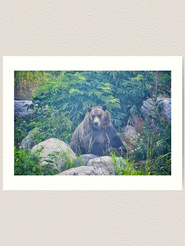 Alternate view of Grizzly in the Mist Art Print