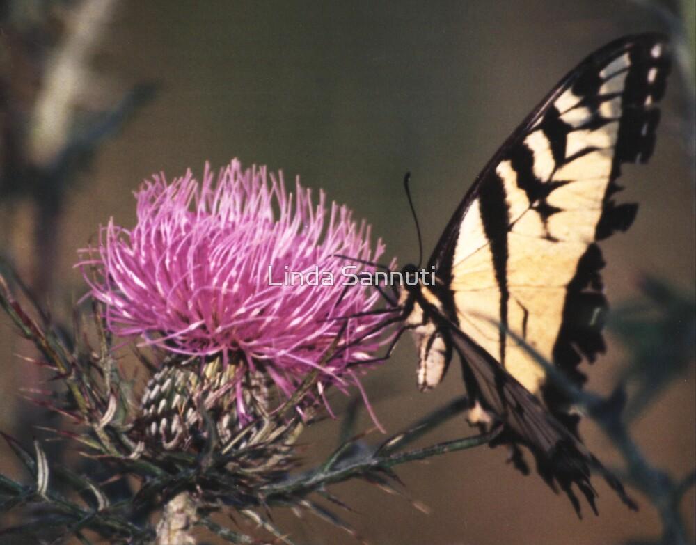 butterfly by Linda Sannuti
