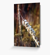 Prairie Flower Greeting Card