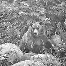 Grizzly in the Mist - Black & White by Tracy Riddell