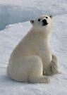 Polar Cub by Steve Bulford